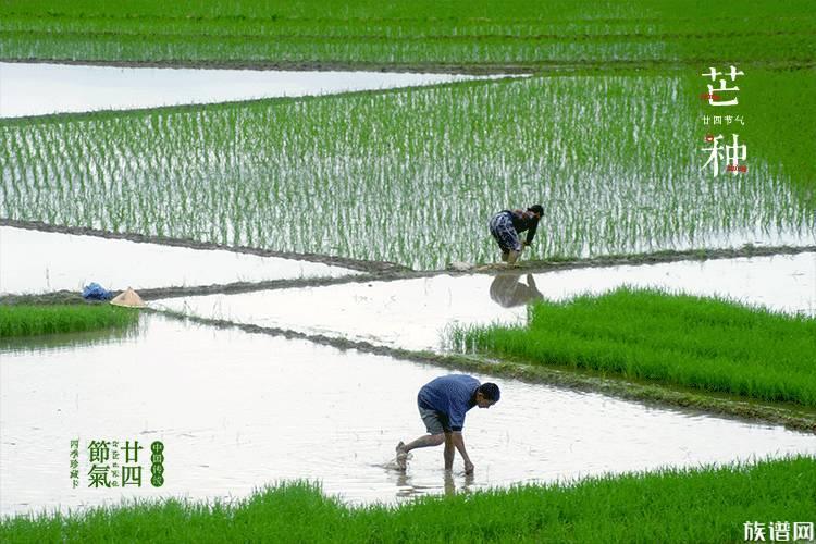 二十四节气:中国人才有的春夏秋冬