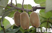 中国传统24节气:秋分